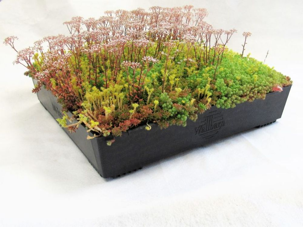 Wallbarn - M-Tray Wildflower Green Roof Kit with Geotextile Fleece