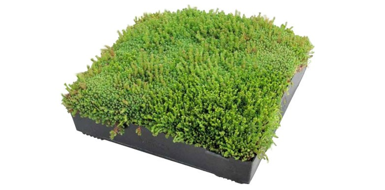 An Introduction to Green Roofs