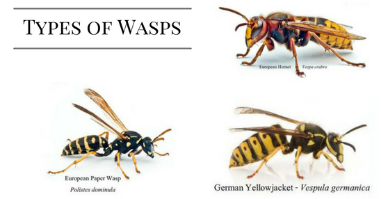 How To Safely Remove A Wasp S Nest