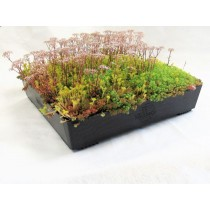 Wallbarn - M-Tray Wildflower Green Roof with Geotextile Fleece