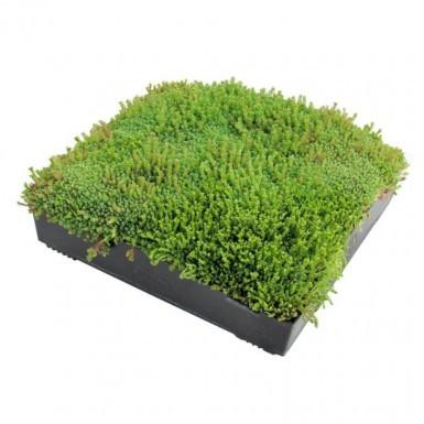 Wallbarn - M-Tray Sedum Green Roof Kit with Geotextile Fleece